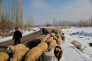 Agriculture in Iran - Iranian shepherds moving their sheep. North-western Iran, winter 2008.