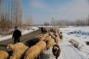 Shepherds moving their sheeps, between Khoy an...