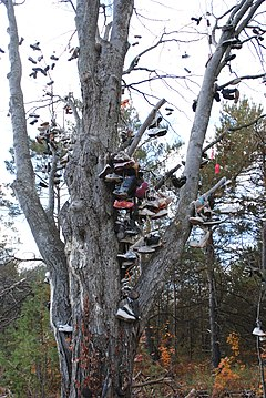 Photograph of a tree full of shoes tied together and hanging from the branches
