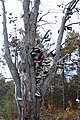 Shoe tree Kalkaska, Michigan.jpg