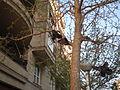 Shoes tree 0001.JPG