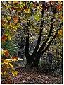 Sintiki Amo Poroia plane trees.jpg