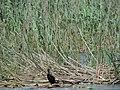 Small Prespa Lake 2019-06-01 06.jpg
