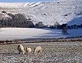 Snowy Hambledon Hill 20100107.jpg