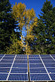 Solar panels in front of trees (3077174073).jpg