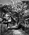 Spomladanski motiv iz Kranjske gore (cvetoči nagnoj) 1930.jpg