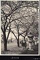 Spring in Japan - cherry blossoms bloomed (1914 by Elstner Hilton).jpg