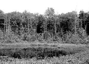 Spruce Hole Bog-very large photo.jpeg