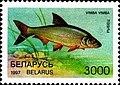 Stamp of Belarus - 1997 - Colnect 278754 - Vimba Bream Vimba vimba.jpeg