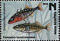Stamp of Belarus - 2019 - Colnect 856966 - Three Spined Stickleback Gasterosteus aculeatus.jpeg