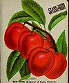 Stark fruits (1896) (20544408865).jpg