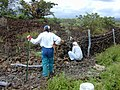 Starr-020518-0024-Bidens pilosa-fence building with Kim and Terry-Puu o Kali-Maui (24181017769).jpg