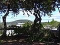 Starr-041022-0008-Schinus terebinthifolius-habit-Makawao-Maui (24600303152).jpg