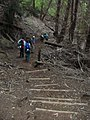 Starr-041221-1843-Cupressus macrocarpa-Haleakala ridge trail-Polipoli-Maui (24695712866).jpg