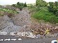 Starr-110201-0536-Bocconia frutescens-habitat and gulch after flooding rains-Keokea-Maui (24779788870).jpg