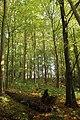 Steenbergse bossen 40.jpg