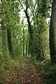 Steenbergse bossen 43.jpg