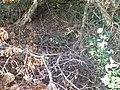 Steinlachsgraben Haufen Baumschnitt unten.jpg