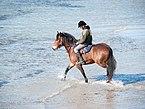 Strandgalopprennen, Wustrow (P1080213).jpg
