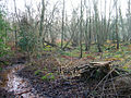 Stream, Greatham Common - geograph.org.uk - 297293.jpg