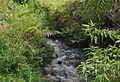 Sungai di Lingkungan Padepokan.jpg