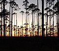 Sunset at Okefenokee Swamp.jpg
