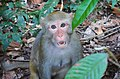 Surprising monkey at the Dulahazra Safari park, Bangladesh.jpg