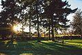 Surrey, Nonsuch Park trees 6 December 2014.jpg