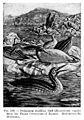Swimming reptilian bird (Hesperornis regalis) Wellcome M0006026.jpg