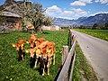 Switzerland calfs on grasland.jpg
