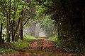 Túnel de árboles Reserva Mbaracayú.jpg