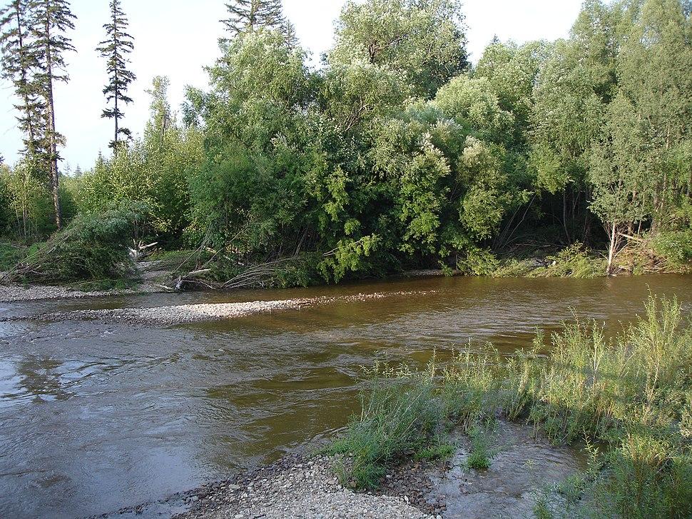 Taiga of Far East near Imeni Poliny Osipenko village, Khabarovsk Krai