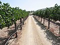 Temecula California vineyard.jpg