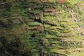 Terraços Agricolas em Camara de Lobos.jpg