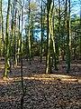 Texel - De Dennen - Beech Forest - View SSE.jpg