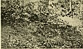 The Auk (1896) (20340663792).jpg