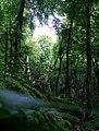 The Jungle Next Door (219930861).jpeg