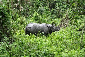 The Pride of Assam.jpg
