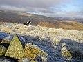 The Sentry on Watch Knowe - geograph.org.uk - 1093559.jpg