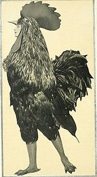 chanticleer bird