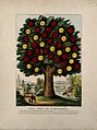 The tree of temperance, showing benefits caused by healthy l Wellcome V0007655.jpg