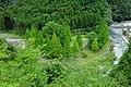 Tirol Forest201908-02.jpg