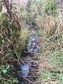 Tomales Point Water Sources- Southwest Section- SW19a - September 3, 2020 (5dc7e47c-a9d9-4800-997d-a930dea45af3).jpg
