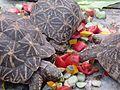 Tortoise0.jpg