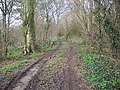 Track into Spar Coppice from Hinton Lane - geograph.org.uk - 362061.jpg