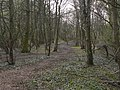 Track through the woods - geograph.org.uk - 1805398.jpg