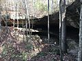 Tree Fern Cave Alabama.JPG