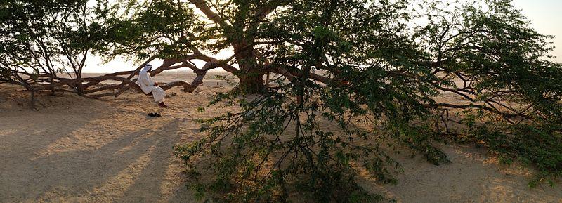 File:Tree of Life Bahrain at sunset.jpg