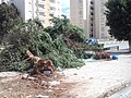 Trees cut off near Tripoli bridge, Benghazi.JPG
