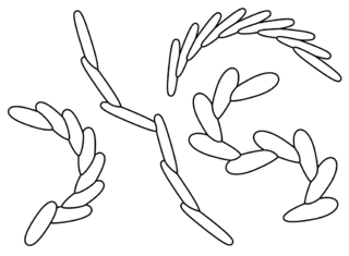 <i>Treptichnus pedum</i> ichnotaxon